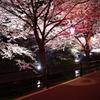 五条川 夜桜 2
