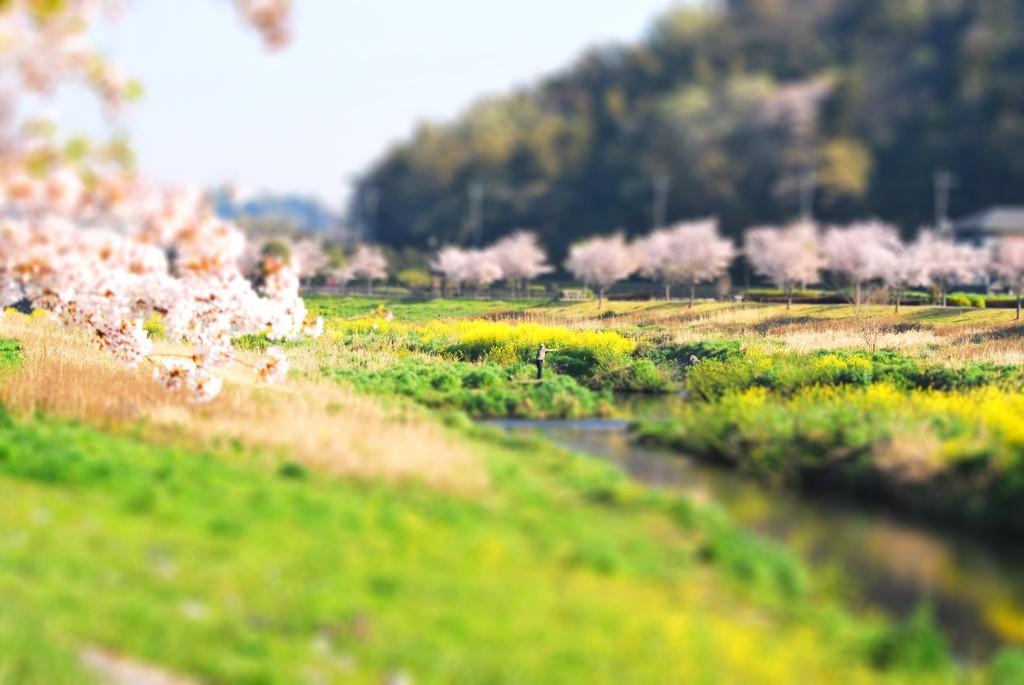 「春を釣る」の巻。
