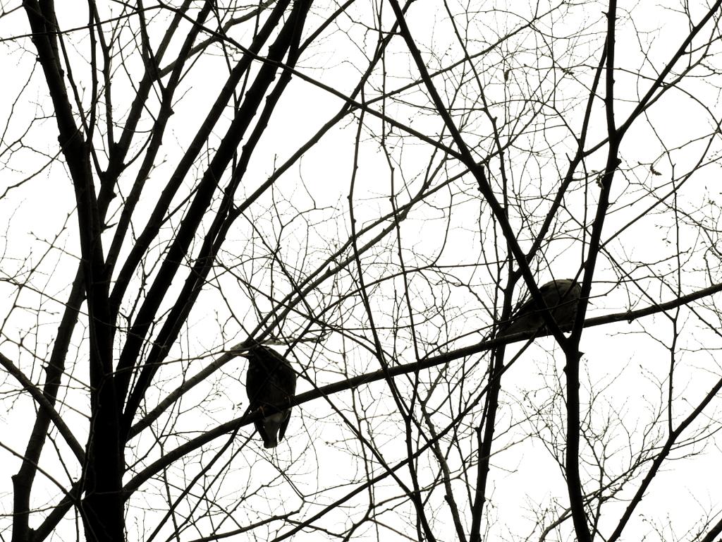 なまえをしらない鳥