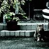 乗用車と猫