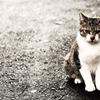 アスファルトと猫