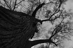 もじゃもじゃの大樹