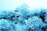 Glazed Frost