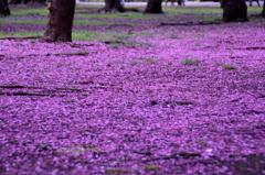 紫紺の絨毯