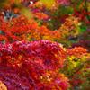 東京にも秋が来た^^
