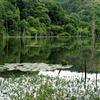 トンボ飛ぶ池