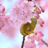 春見っけ!