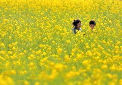 なかよしⅡ 春色の風