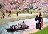 みんなニコニコ しあわせ桜