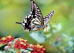 蝶々三昧 発進