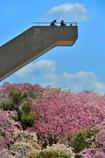 しだれ桜展望台