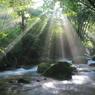 渓流の木漏れ日