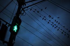 信号とカラス
