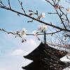 京都も春間近ですよ♪