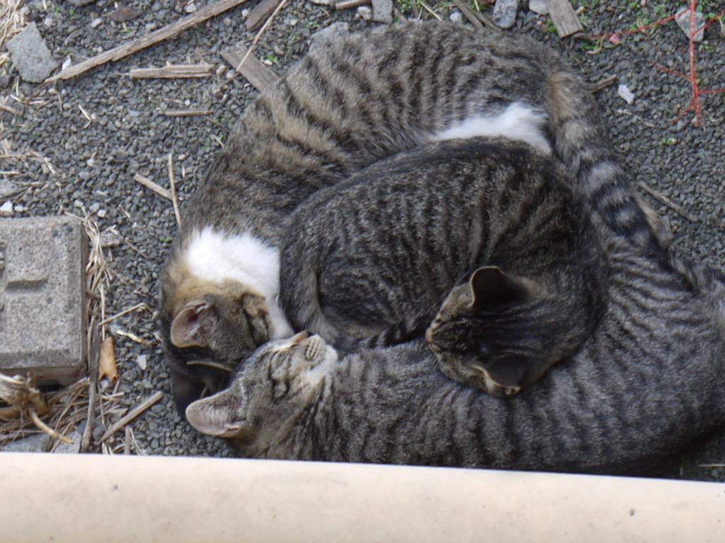 猫たちが作る猫鍋