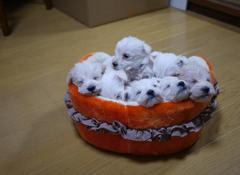 7匹の寝顔