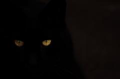 闇からの使者