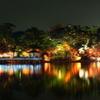 東公園-紅葉ライトアップ