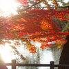東公園紅葉⑤