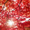 東公園紅葉①
