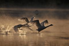 朝霞を飛ぶ