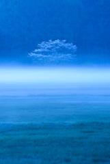 霧に浮かぶ