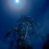 月光に揺れる