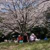 花見散歩04
