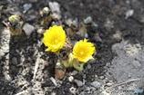 春 ほほえむ