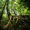 原生林の森から