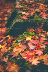 秋が散る頃