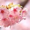 春ですね。3
