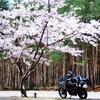 桜の木陰で一休み