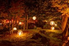 紅葉の森の神秘