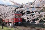 名鉄スカーレットと桜