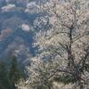 霞間ヶ渓の春