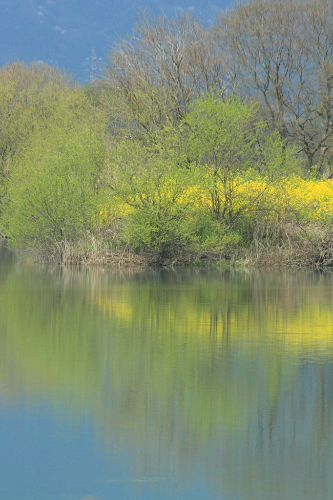 春の揖斐川
