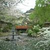 鳥取県倉吉市の桜祭り
