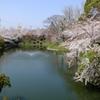 2015 岡崎城 堀と桜