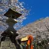 新蒲原の桜