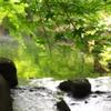 愛知 徳川園の緑