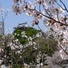 2015 春の岡崎城
