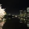 夜桜 舞鶴公園