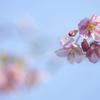 春を皆様へ(^.^)