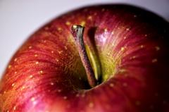 リンゴのほね(^^ゞ