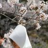 桜の前の式