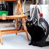 自由気ままな黒猫ちゃん