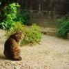三毛猫ホームズ