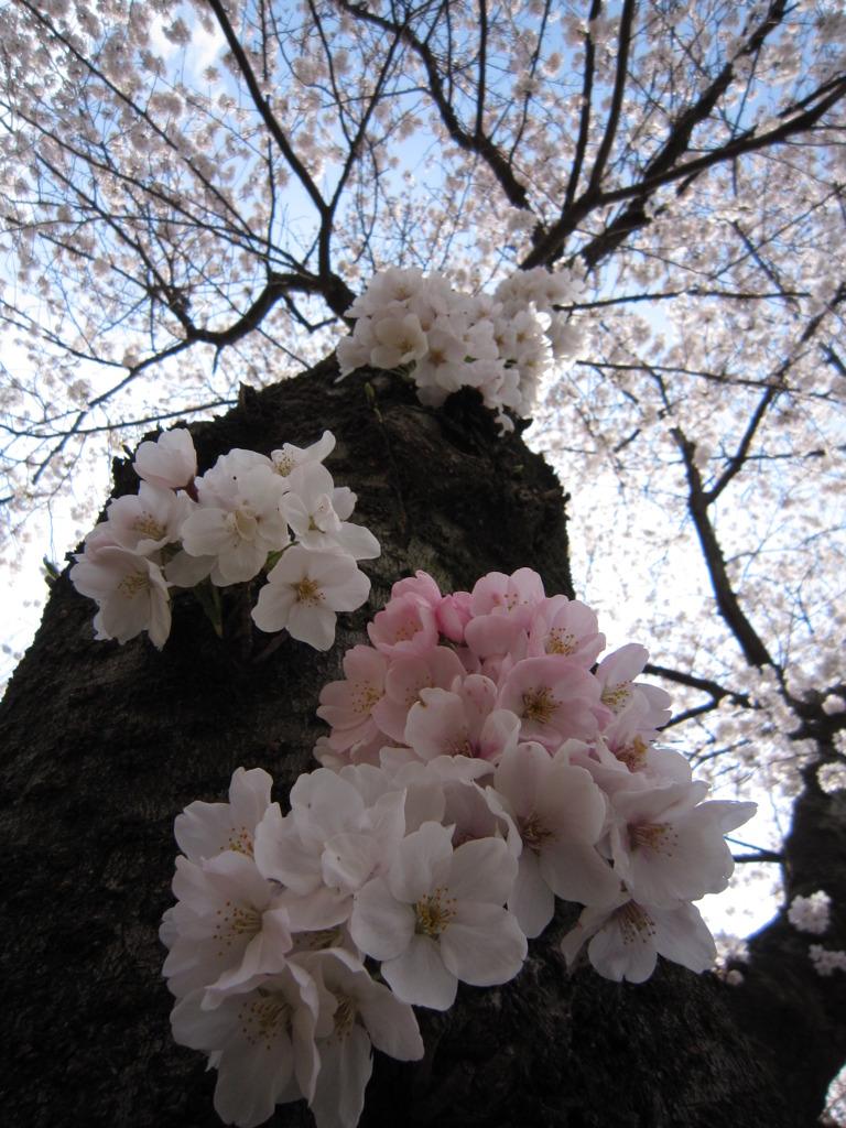 春あふれ出る