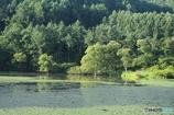 夏の池 7